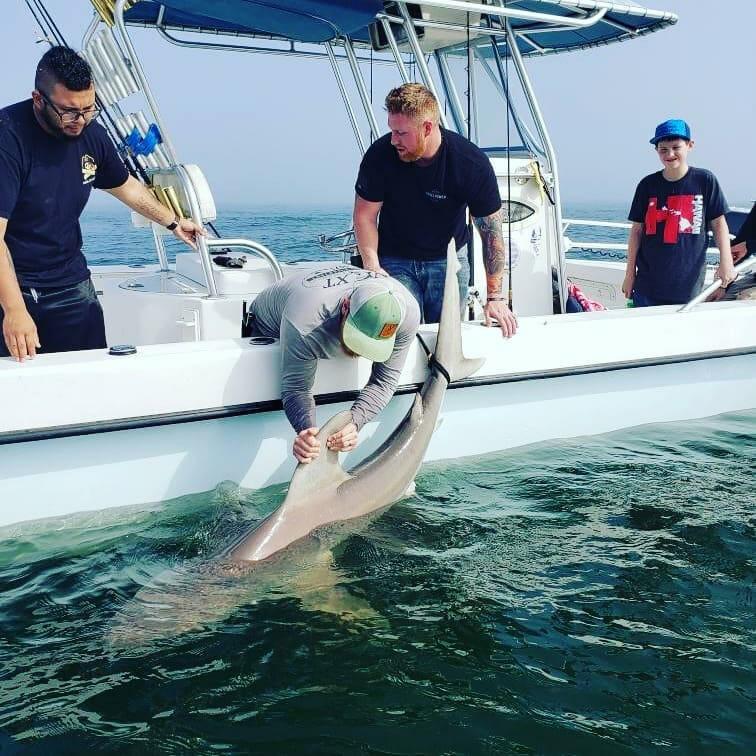 Shark Release, Pensacola Florida