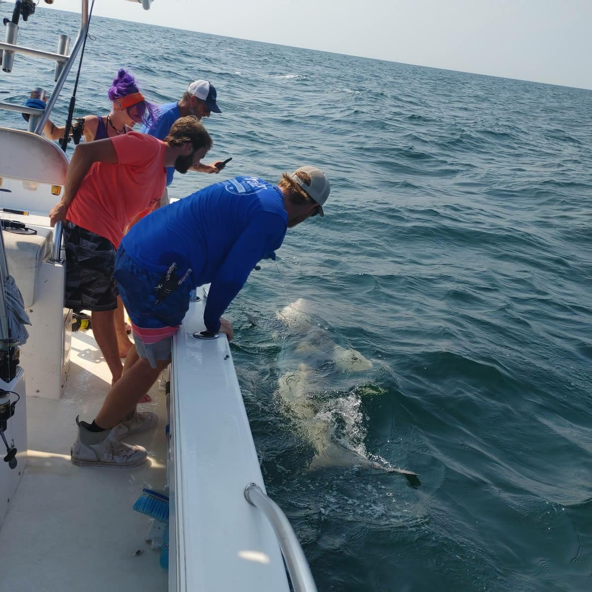 Pensacola Beach Shark Fishing Charters